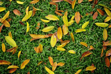 sward: Leaves on green sward, Autumn concept