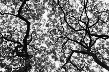 Tree pattern look up view in black and white style photo