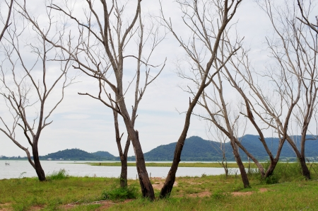 mummified: Dead trees in dam area, Thailand Stock Photo