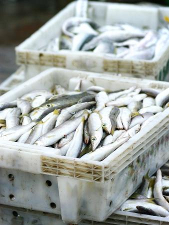 industrail: Fish in basket, Fishery industrail