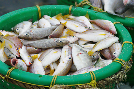 Fish in basket, Fishery industrail