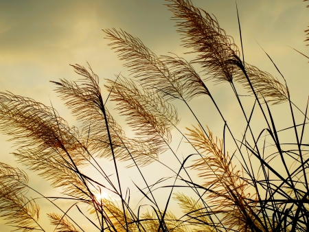 susceptible: Breeze swaying the grass with sunset sky background Stock Photo