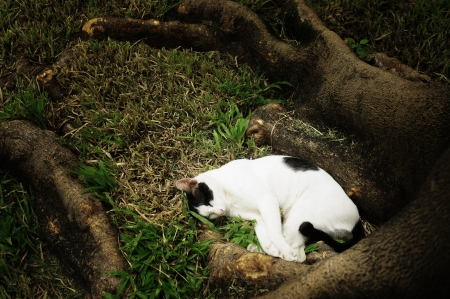 Sleepy cat in the garden photo