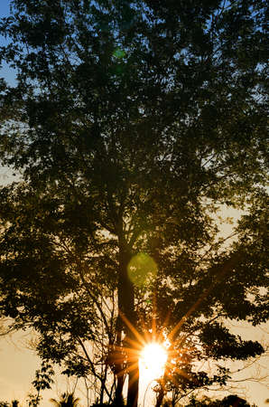 Sunrise sky with tree silhouette photo