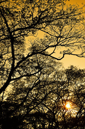 Tree silhouette nature pattern with sunset sky photo