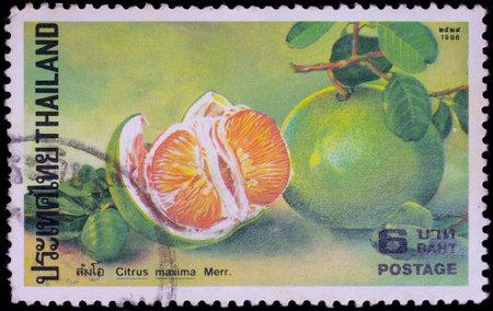 THAILAND - CIRCA 1986 : A stamp printed in Thailand shows image of Grapefruit or Citrus maxima Merr, circa 1986