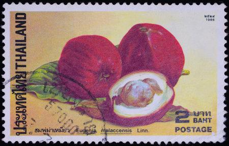 THAILAND - CIRCA 1986 : A stamp printed in Thailand shows image of Eugenia malaccensis Linn, circa 1986