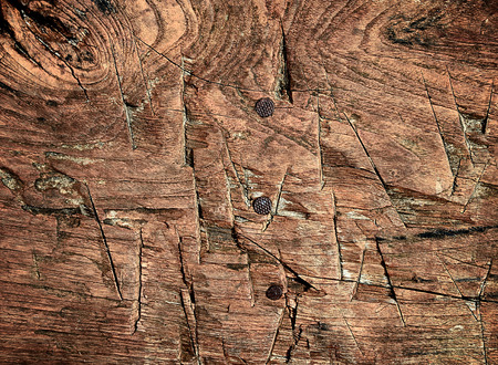 Wooden texture with incision and nail photo