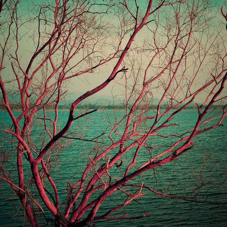 albero secco: Vintage rosa albero secco a lago, Paesaggio astratto
