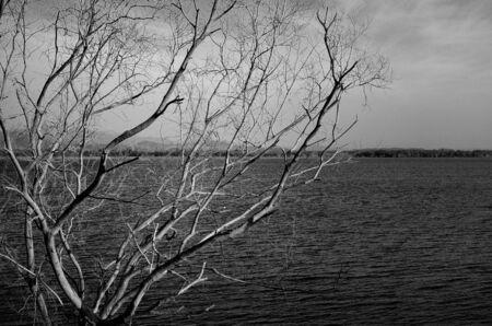 albero secco: Albero secco sul lago, Paesaggio astratto