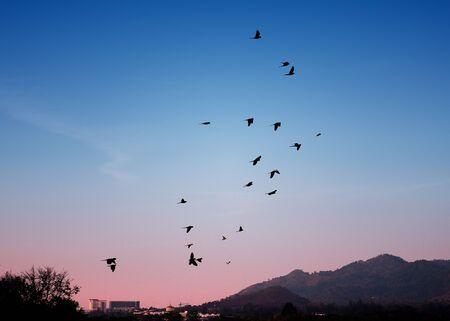 Bird flying in sky, Freedom concept photo