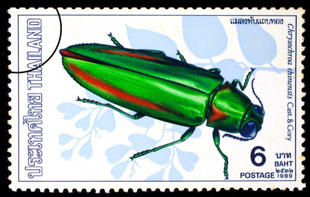 gory: THAILAND - CIRCA 1989 : A stamp printed in Thailand shows image of Chrysochroa chinensis Cast. & Gory, circa 1989