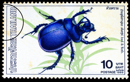 roth: THAILAND - CIRCA 1989 : A stamp printed in Thailand shows image of Enoplotrupes sharpi Jord. & Roth., circa 1989
