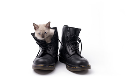 Cute kitten (Siamese Cat) in the boots isolated photo