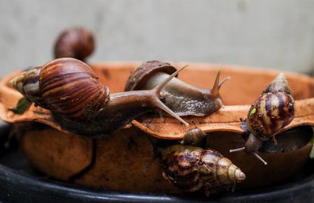 gastropod: Gastropod on earthenware dish in garden Stock Photo