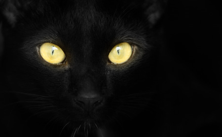 Closeup portrait of a Halloween black cat with yellow eyes