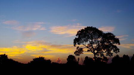 cielo atardecer: Sihouette �rbol con el cielo agradable puesta de sol, fondo Paisaje