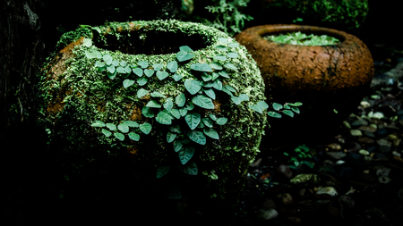 Fern and ivy on old earthenware jar photo