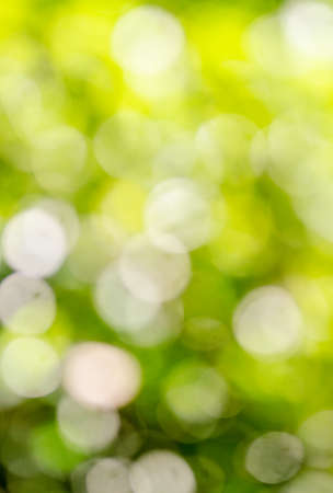 spring green: Abstract defocused background