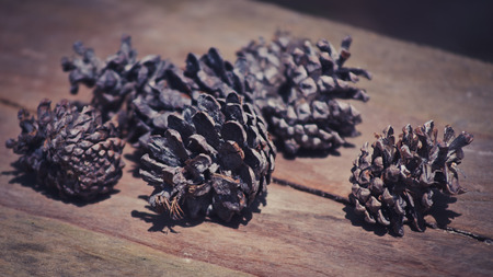 conifer: Conifer cone on wooden background, Vintage style