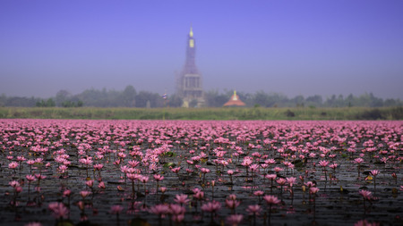 unseen: Sea of pink lotus,Nong Han, Udon Thani, Thailand unseen in Thailand