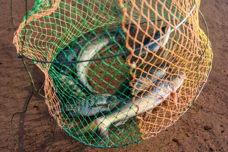 grate: Fish in the grate beside lake