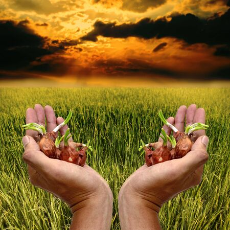 Cultivation concept, Seed in hand for planting