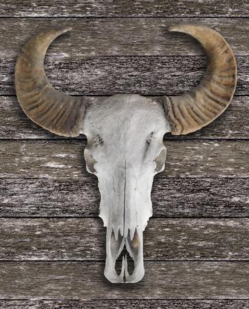 bocinas: Buffalo cr�neo con cuernos en la pared