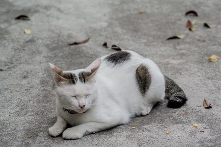 dried leaf: Sleepy cat on ground with dried leaf