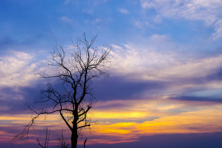 air dried: Silhouette of dried tree with dramatic sky