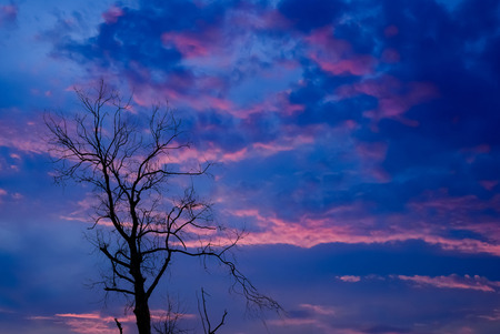 air dried: Silhouette of dried tree with twilight and cloudy sky Stock Photo