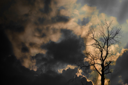 air dried: Silhouette of dried tree with sun ray and cloudy sky