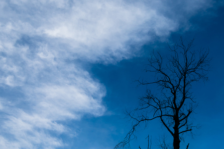 air dried: Silhouette of dried tree with blue sky Stock Photo
