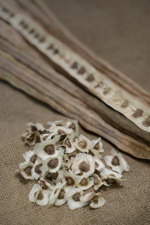 drumstick tree: Dried Moringa pods and seeds on sackcloth, Seed Horse radish tree (Moringa oleifera Lam.)