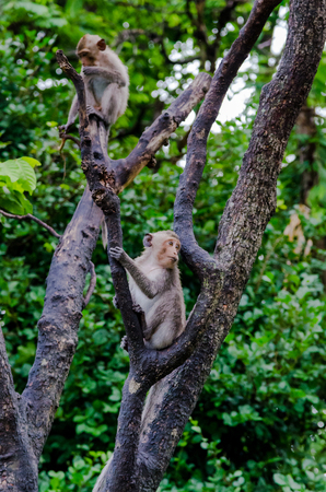abandon: Two young monkeys climbing on tree