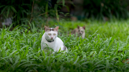 Cats in garden with green grass background