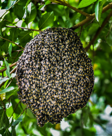 Bees at honeycomb, Insect in nature Stock Photo