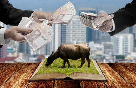 Businessman buy livestock knowledge concept, Banknote in hand for knowledge with city background