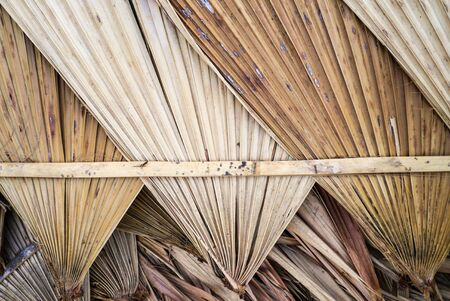 dry leaf: Dry palm leaf Stock Photo