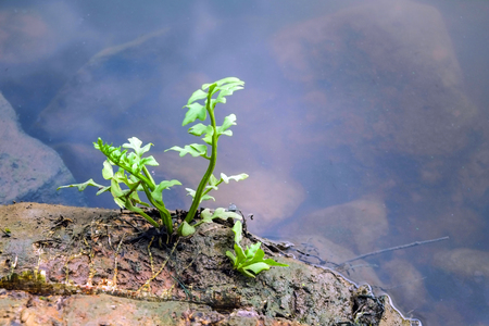 beside: Small tree beside a pond Stock Photo