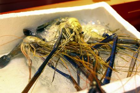 freshwater: Giant freshwater prawn, giant river shrimp