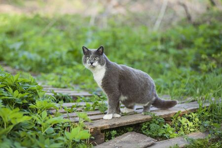 A cute cat walks alone, outdoors