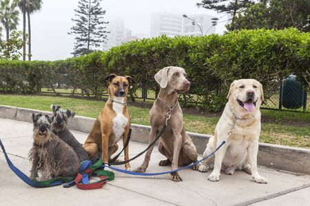 Dogs of different breeds for a walk