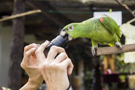 parrot pecks at the camera lens