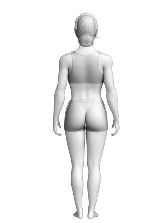 Illustration of female body anatomy