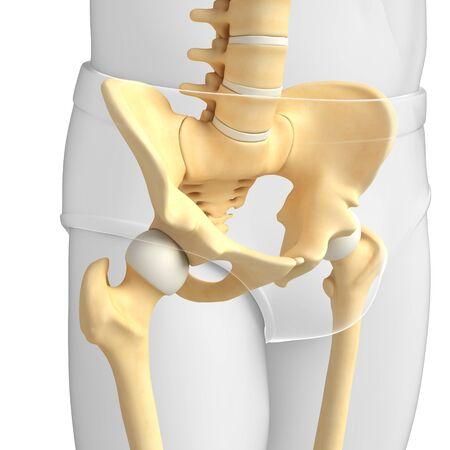 girdle: Illustration of pelvic girdle artwork Stock Photo