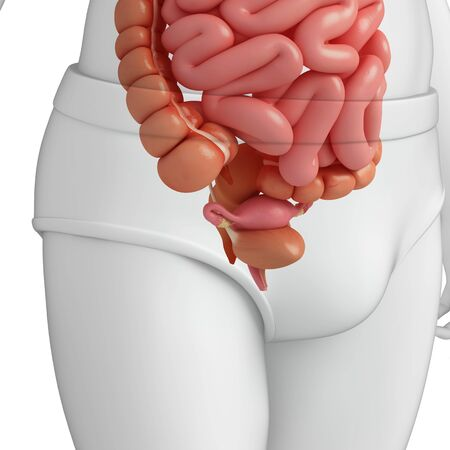 ductus deferens: illustration of female urinary system Stock Photo