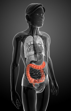 sigmoid colon: Illustration of Male large intestine anatomy Stock Photo