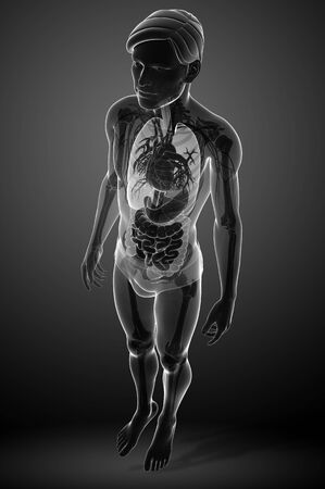 Illustration of male digestive system x-ray artwork illustration