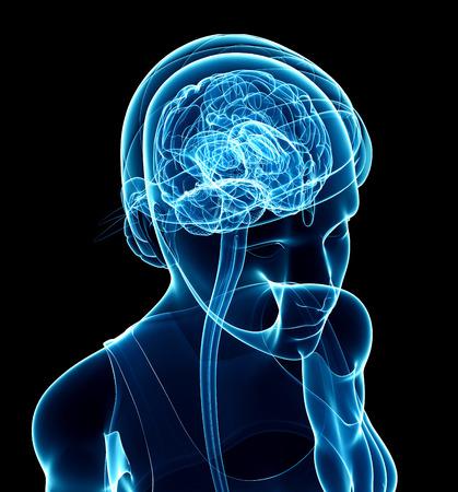 anatomy leg: Illustration of female xray brain anatomy artwork Stock Photo